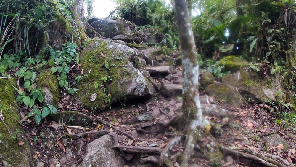 More of the climb to the top of Gros Piton